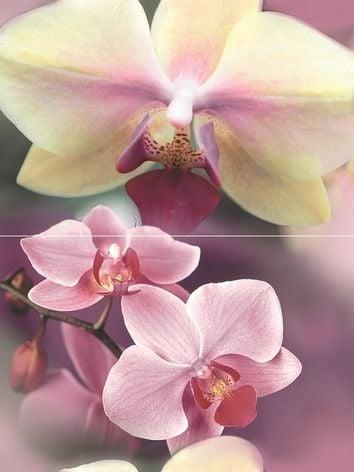 Blossom Панно P2D183 40х30 (из 2-х пл.)Плитка<br><br>