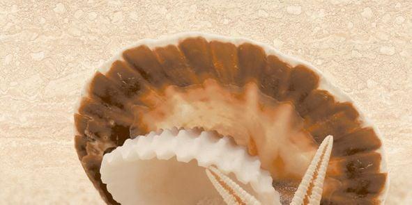 Аликанте Декор 10-00-11-121 25х50Плитка<br><br>