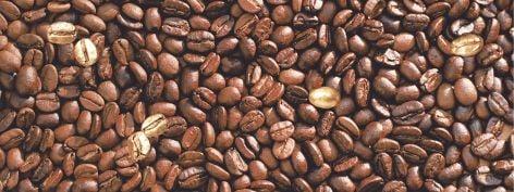 Liberi Декор DWU06LIB434 / DWD06LIB434 15х40Плитка<br><br>