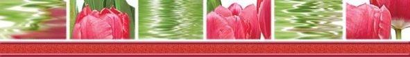 Тюльпаны Бордюр 77-05-47-160-0 50х7Плитка<br><br>